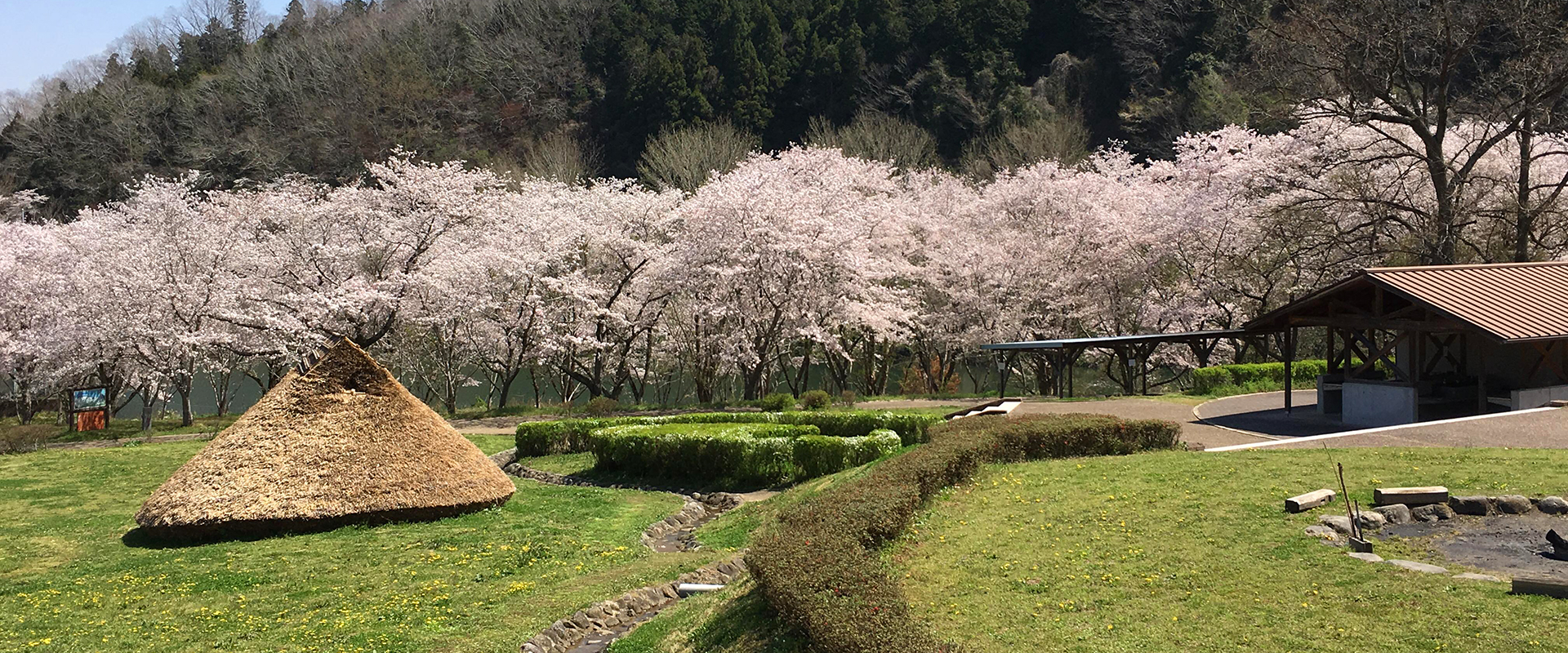 Cherry blossom viewing and camping amidst ancient ruins