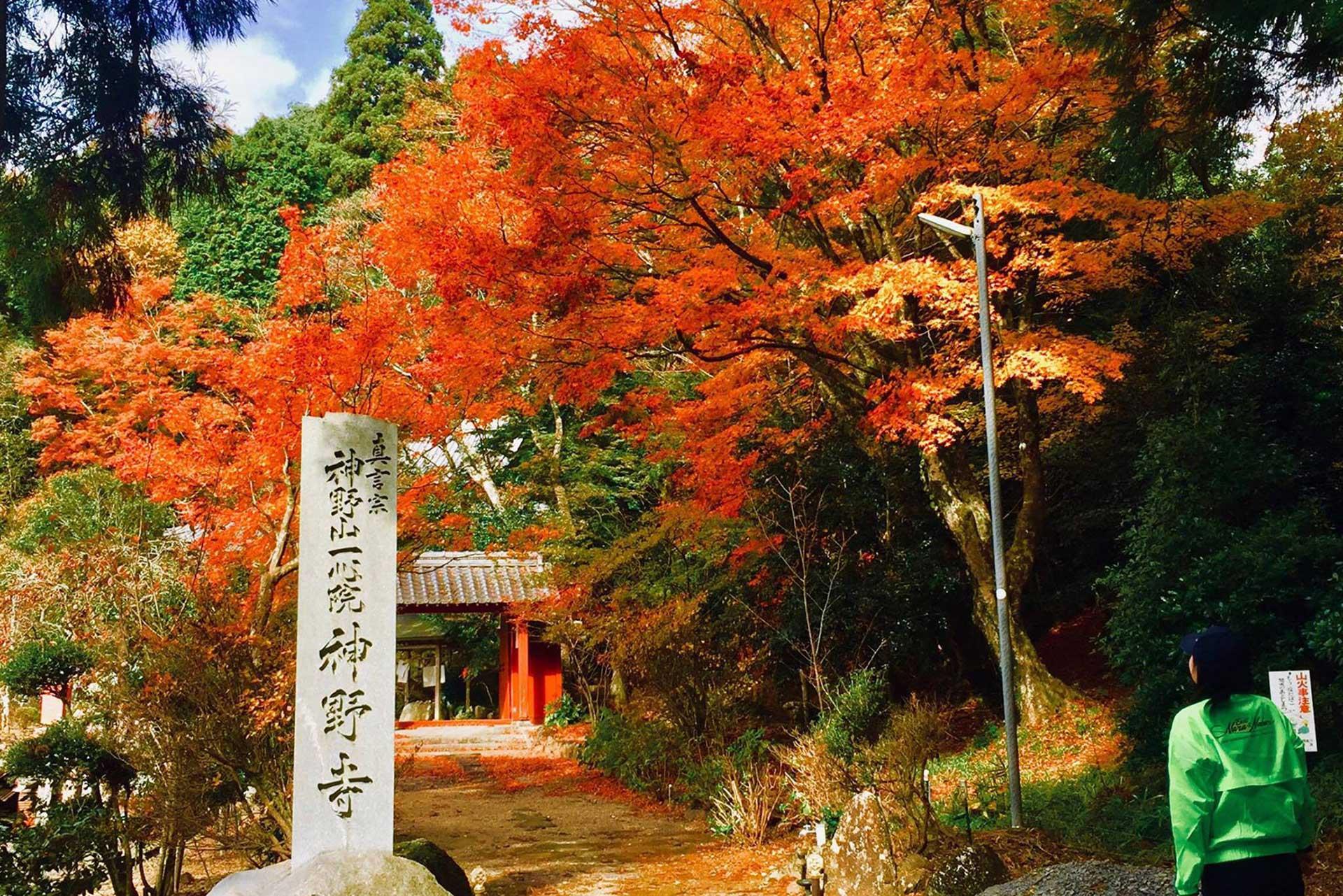 Kono-ji Temple in Fall
