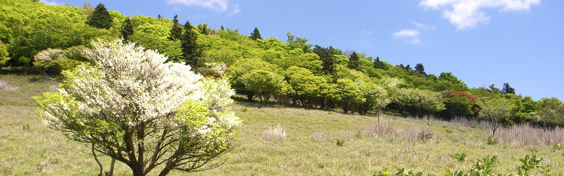 The Best Short Hiking Trail in Kansai