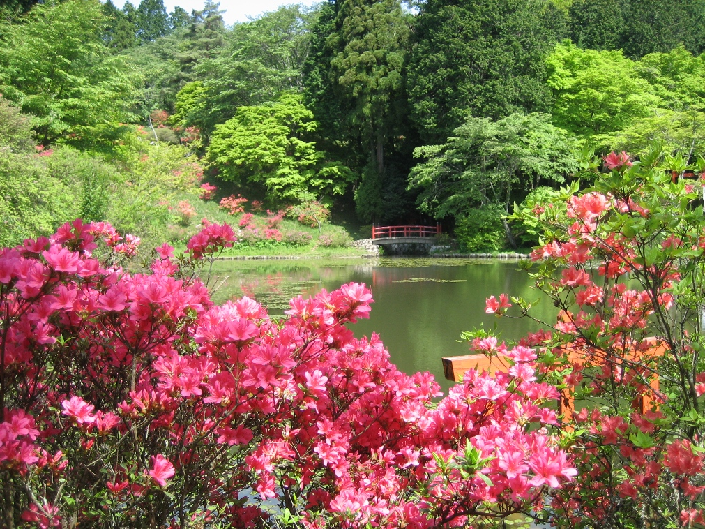 Torimiyama Park in early summer
