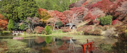 Torimiyama Park in Fall
