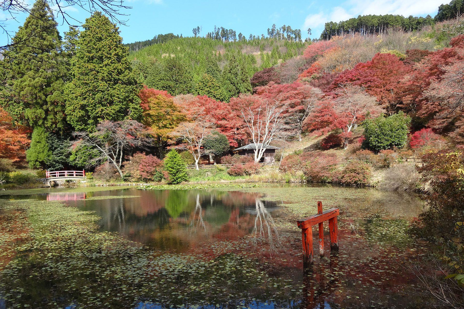 Torimiyama Park in Fall