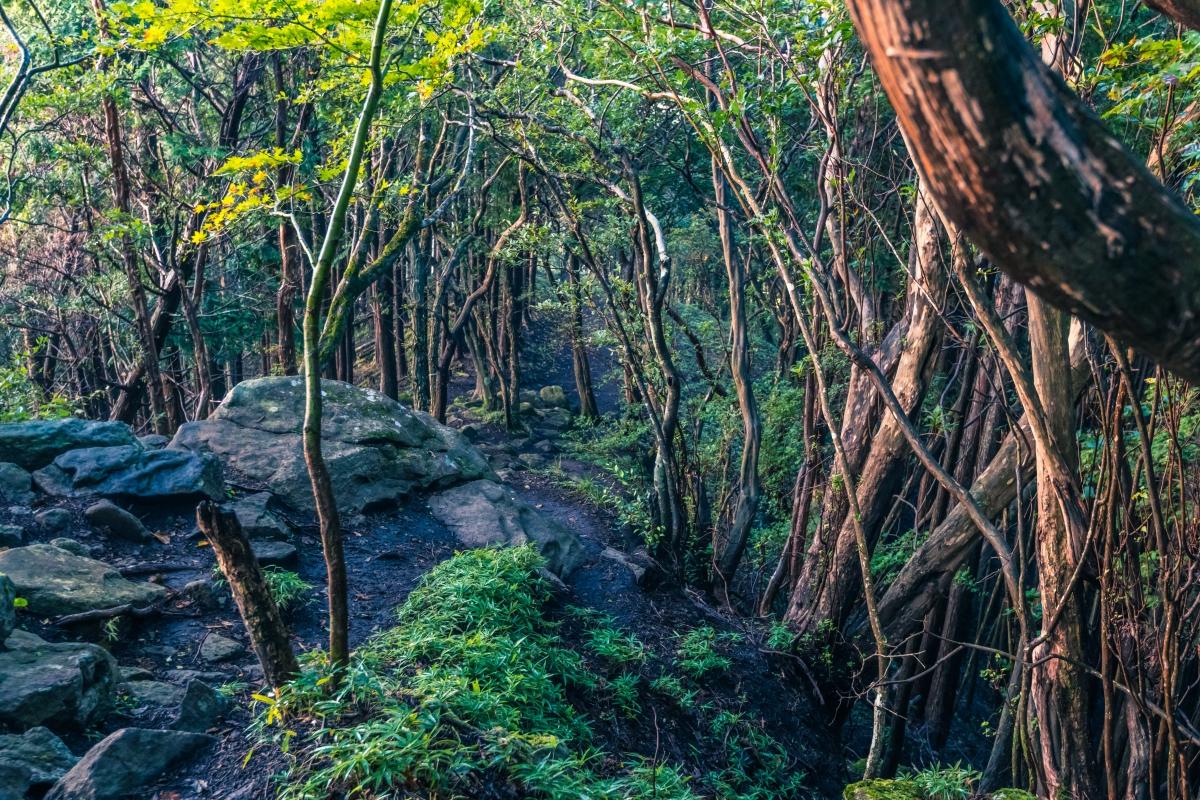Trail path in Mt. Kuroso