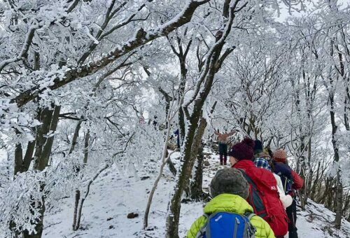 Rime Ice in Mt. Takami / 高見山の霧氷