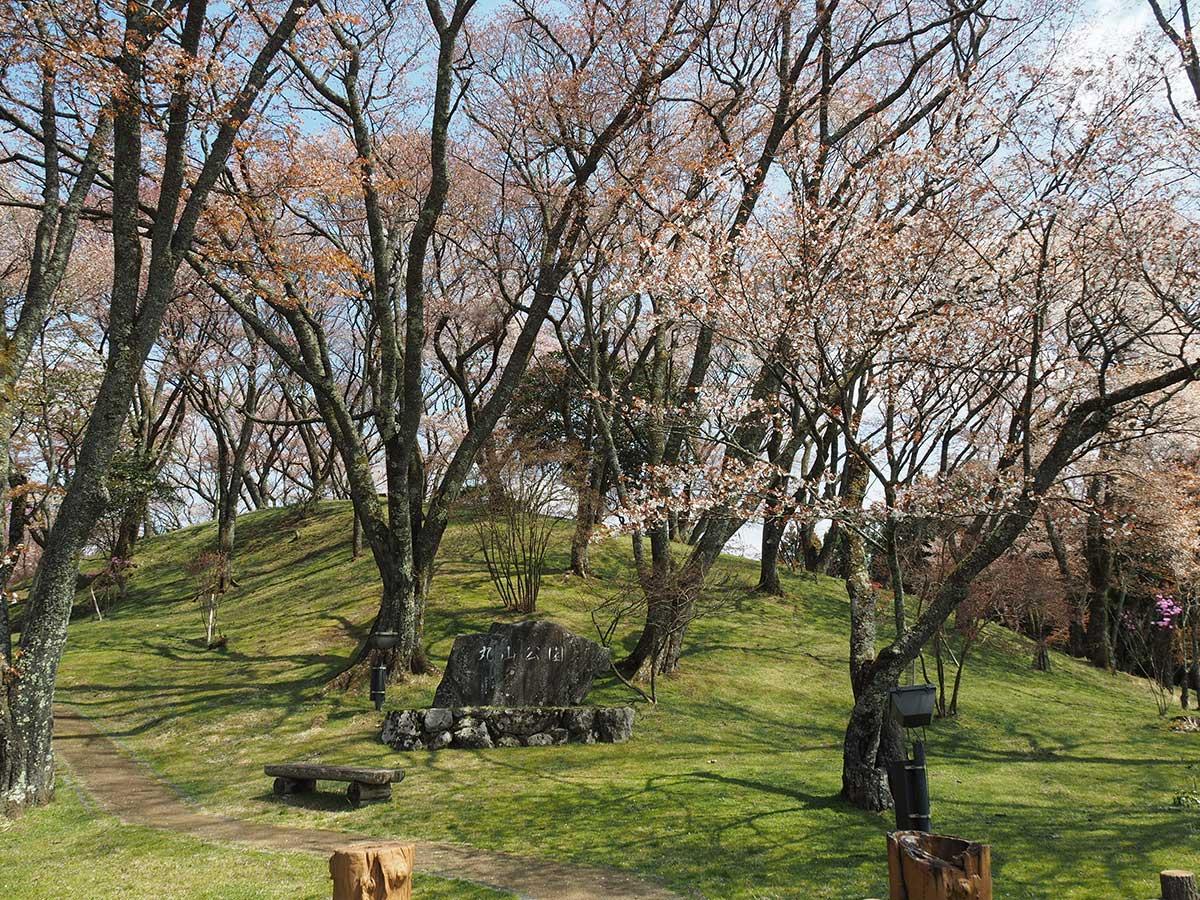 Maruyama Park / 丸山公園