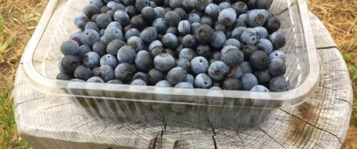 ettfalt-blueberries