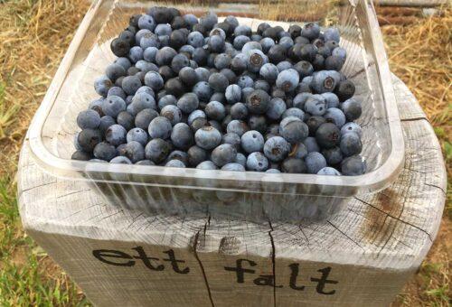 ettfalt-blueberries