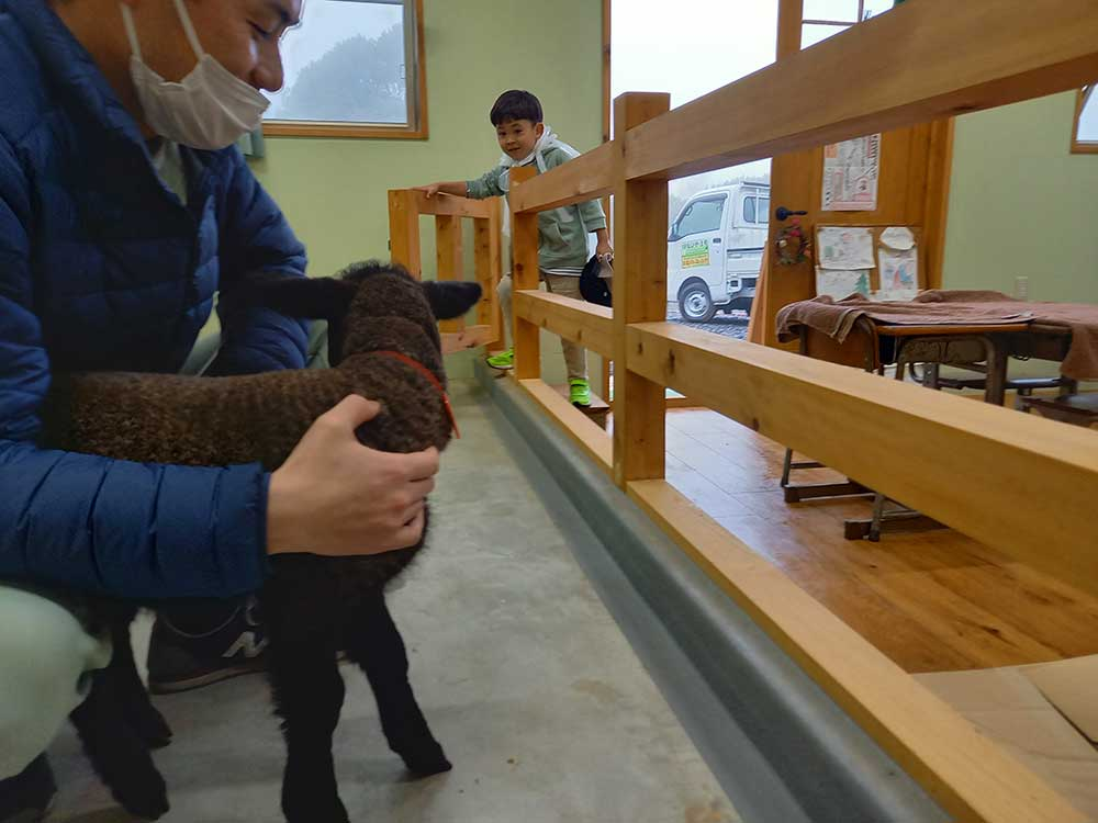 A lamb at Mee Mee Farm / めえめえ牧場の子羊
