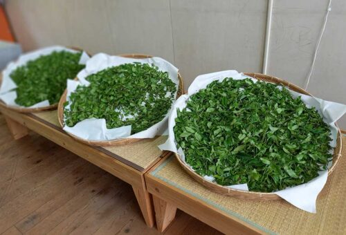 Tea leaves / 茶葉