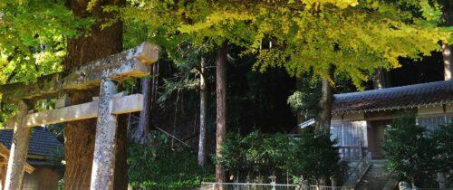 春日神社(土屋原)のラッパイチョウ / Ginkgo tree at Kasuga Shrine